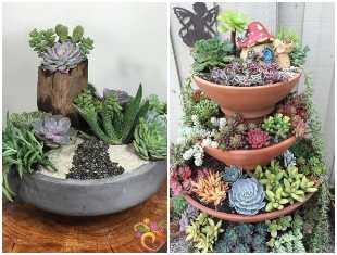 Mini jardins com cactos e suculentas