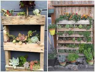 Pallets e suculentas para decoração de jardim