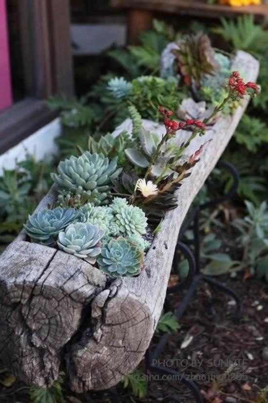 Dicas para decoração com suculentas em madeira