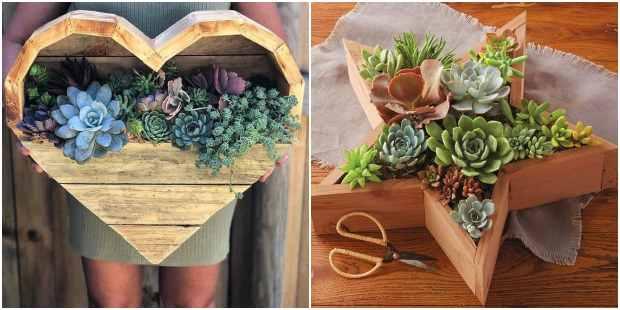 Plante suculentas em madeiras