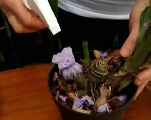 Faça trouxinhas para adubar suas orquídeas