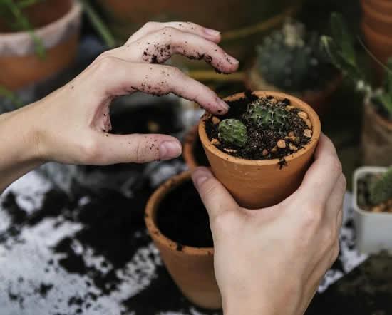 Como usar borra de café nas plantas