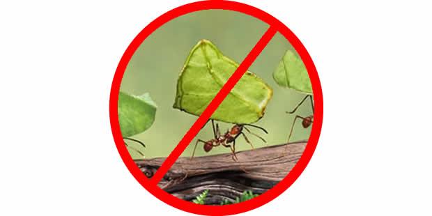 Como acabar com as formigas: dicas infalíveis