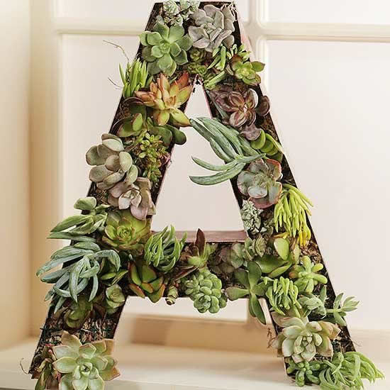 Plante suculentas e decore a casa