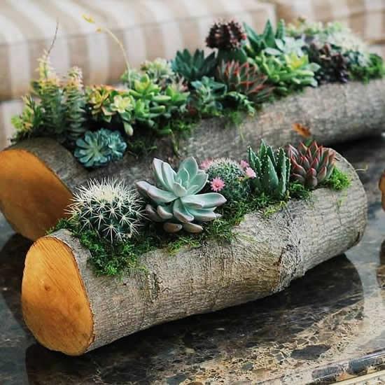 Plantas suculentas plantadas de forma criativa