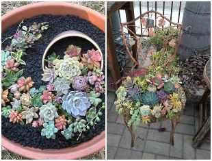 Ideias maravilhosas para plantar suculentas