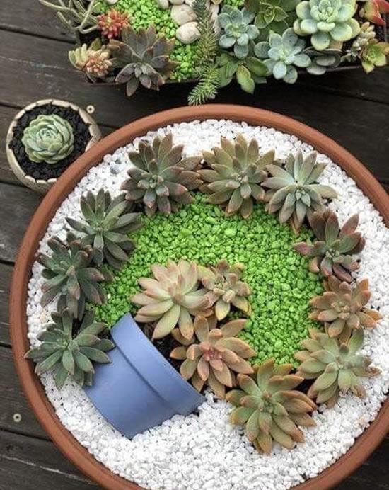 Linda decoração com suculentas para jardim
