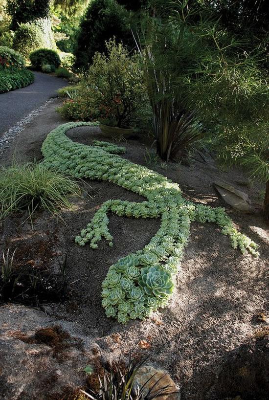 Decore o jardim com suculentas