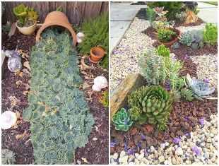 10 ideias para decorar o jardim com suculentas