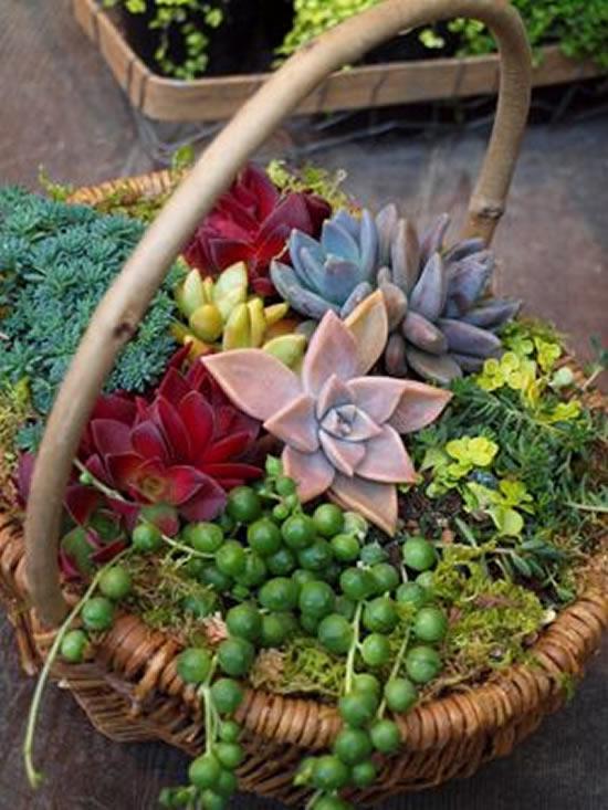 Lindas suculentas em mini jardins
