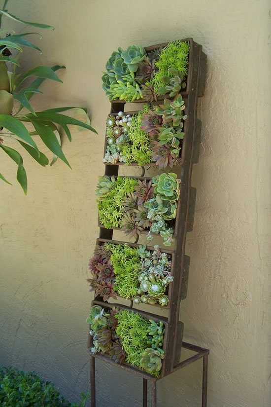 Lindos mini jardins com suculentas