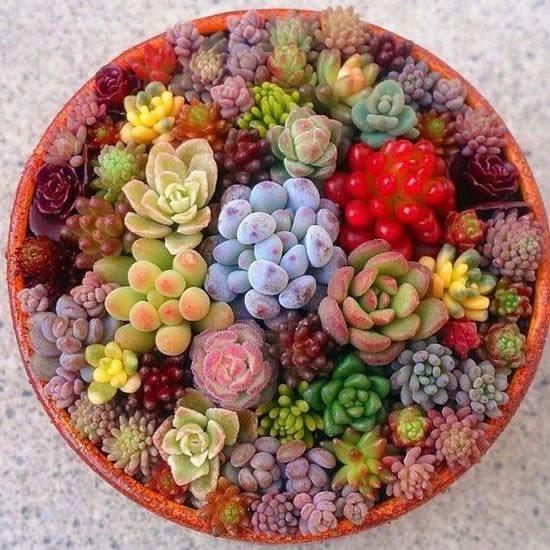 Mini jardins com suculentas
