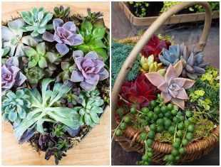 Mini jardins com suculentas para decoração