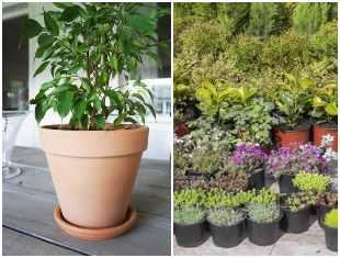 Qual o melhor tipo de vaso para plantar?