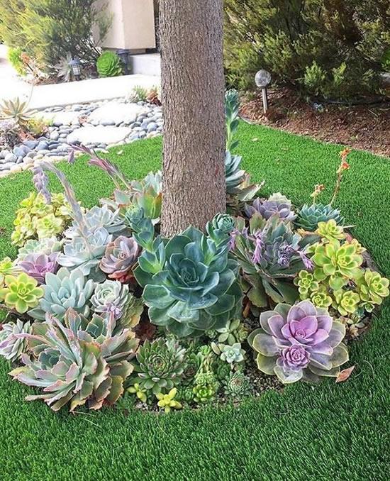 Suculenta decorando o jardim