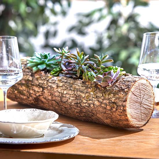 Suculentas em tronco de madeira