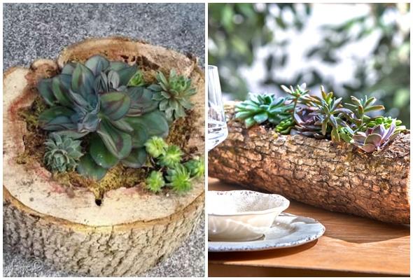 Como plantar suculentas na madeira