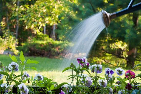 Como tirar o cloro da água para regar as plantas
