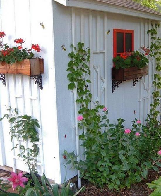 Lindas flores para decorar o quintal