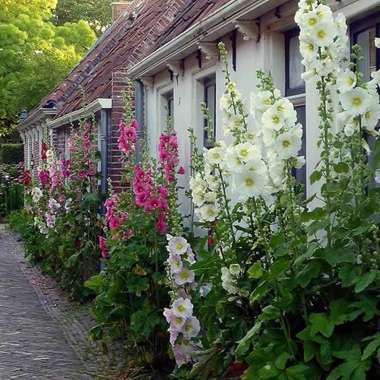 Lindas decorações para quintal com flores
