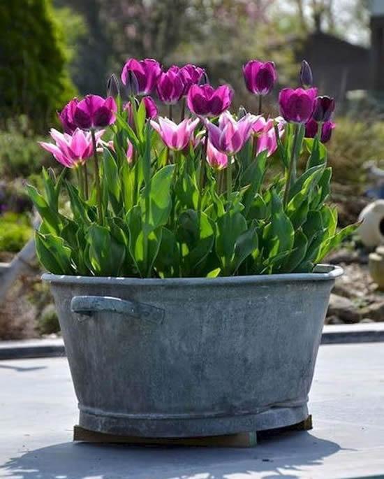 Flores lindas em vasos no jardim