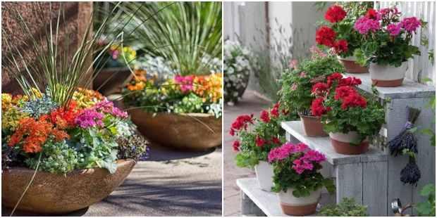Lindas flores em vasos de jardim