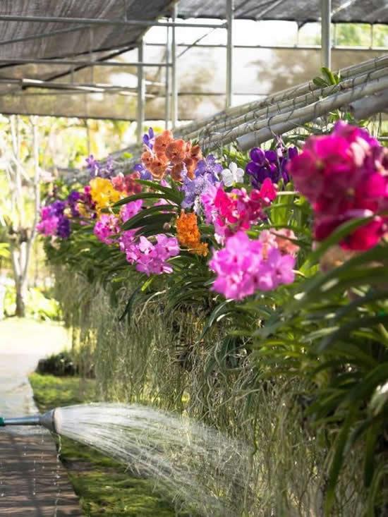 As lindas orquídeas vanda