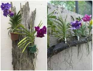 Ideias para plantar orquídeas vanda