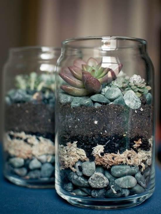Suculentas lindas em potes de vidro