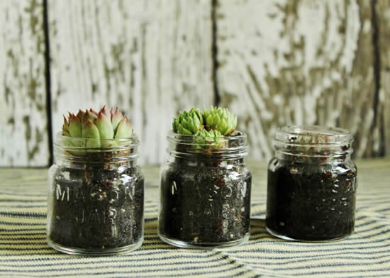 Vasinhos lindos com potes de vidro para suculentas
