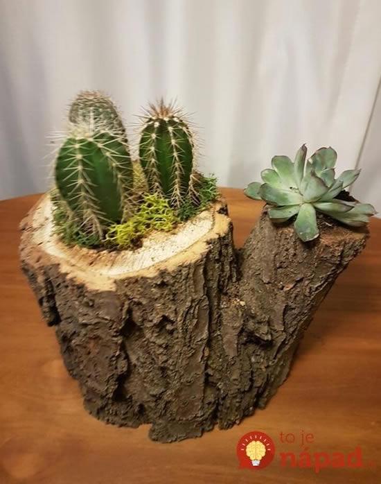 Suculentas em troncos de madeira