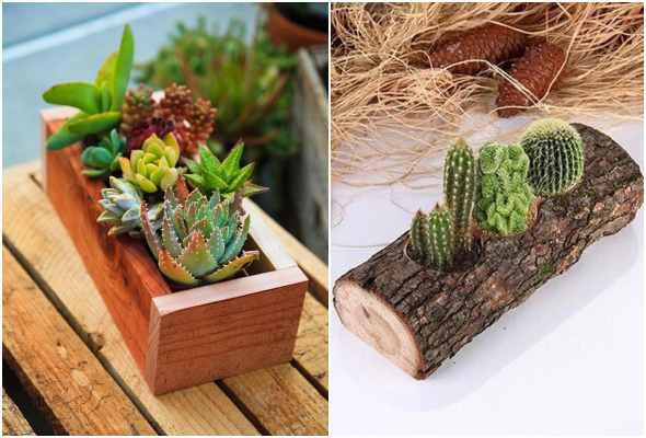 Suculentas na madeira para inspiração