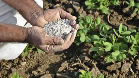Como utilizar ureia agrícola