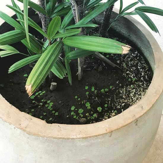 Como evitar ervas daninhas nos vasos