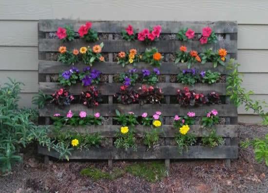Dicas para plantar em pallets