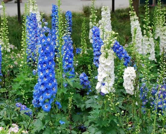 Decoração inusitada para o jardim com flores