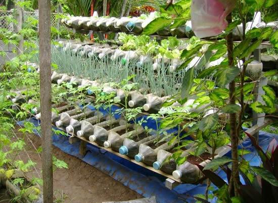 Faça horta com garrafas plásticas