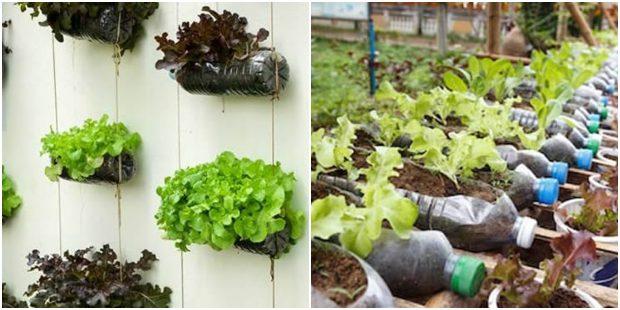 Horta orgânica com garrafa PET