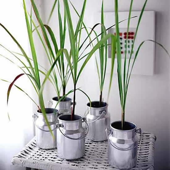 Plante de forma criativa