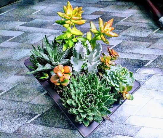 Suculentas em mini jardim maravilhoso para decoração