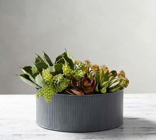 Mini jardim de suculentas lindo e criativo