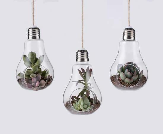 Como plantar suculentas em lâmpadas velhas