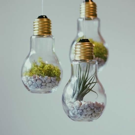 Suculentas em lâmpadas para inspiração