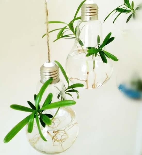Suculentas em lâmpadas velhas