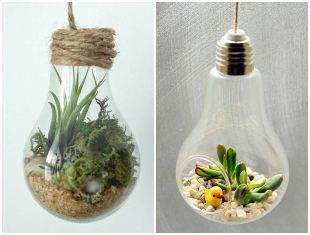 Suculentas plantadas em lâmpadas para inspiração
