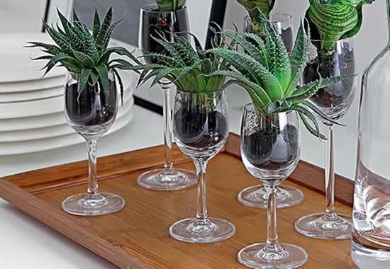 Suculentas em taças de vinho