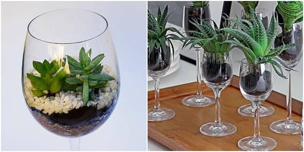 Como plantar suculentas em taças de vidro