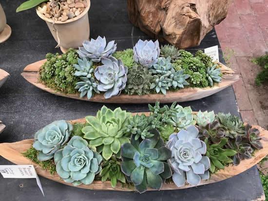 Plante suculentas de forma linda e criativa