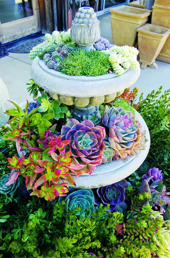 Aprenda como plantar suculentas de forma criativa
