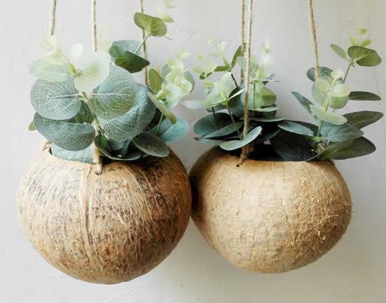Como plantar suculentas no coco